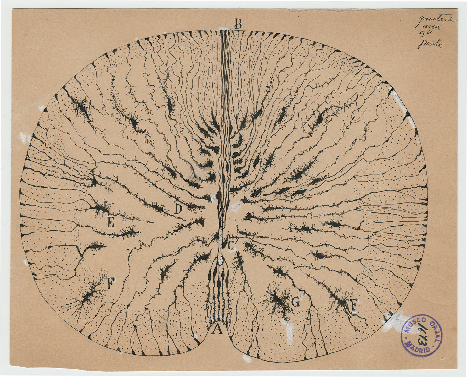 Cajal and the Enchanted Loom, by Rodolfo Llinás